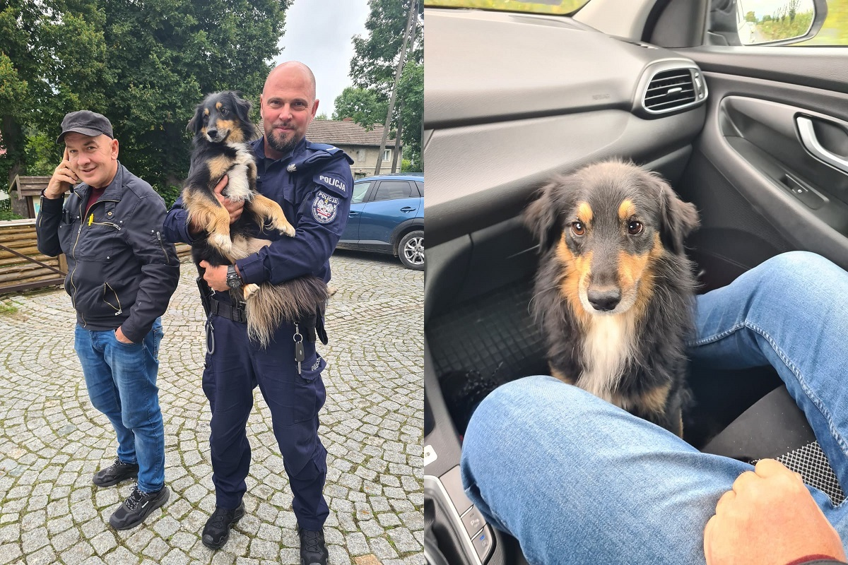 Kamieniec Ząbkowicki: Policjanci uratowali psa - Zdjęcie główne