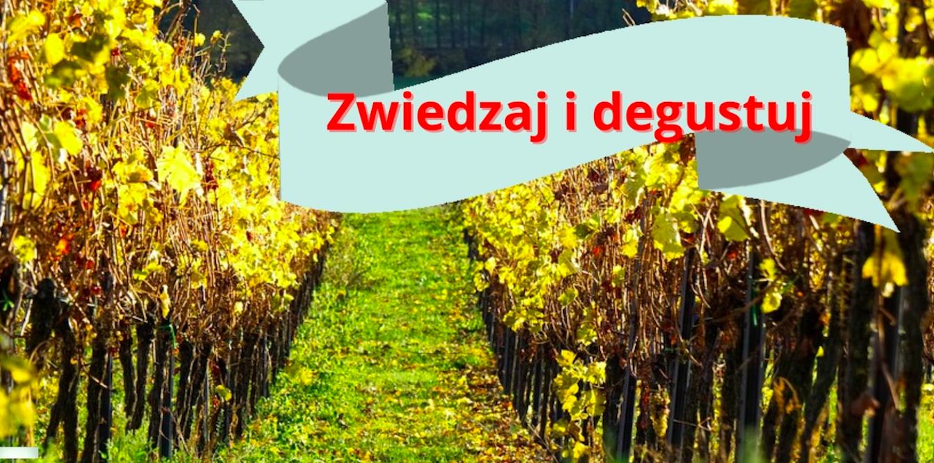 Dolnośląski szlak piwa i wina, czyli zwiedzaj i degustuj - Zdjęcie główne