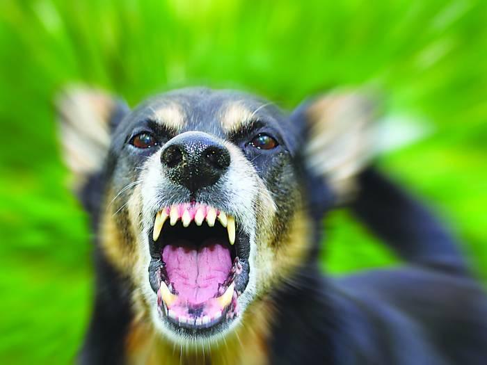 Powiat ząbkowicki. Nieszczepione psy gryzą ludzi - Zdjęcie główne