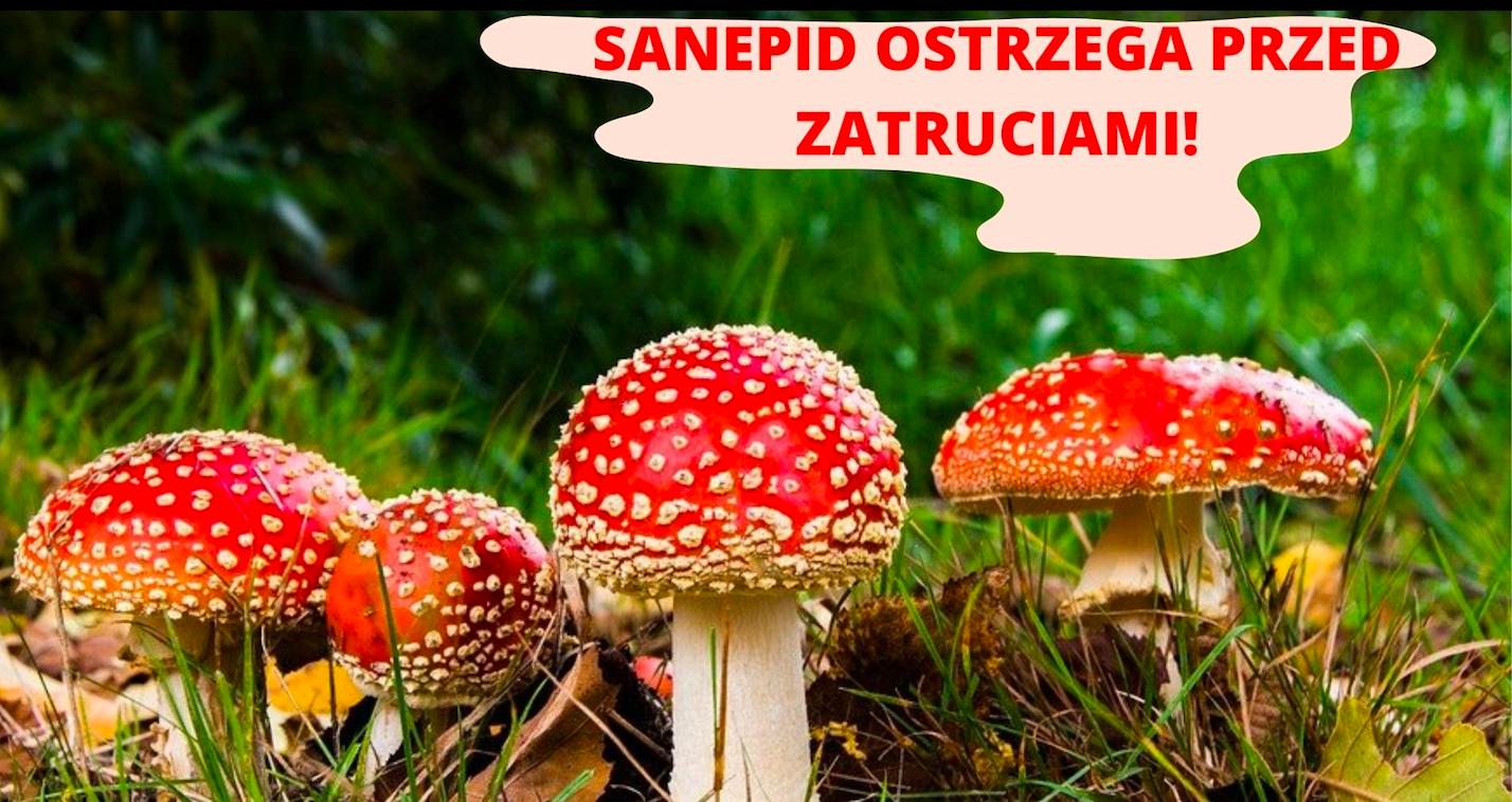 Ząbkowice Śl. Zatrucia grzybami. Sanepid ostrzega - Zdjęcie główne