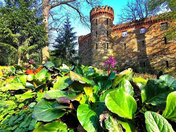 Kamieniec Ząbkowicki: Remont pałacu Marianny Orańskiej - Zdjęcie główne