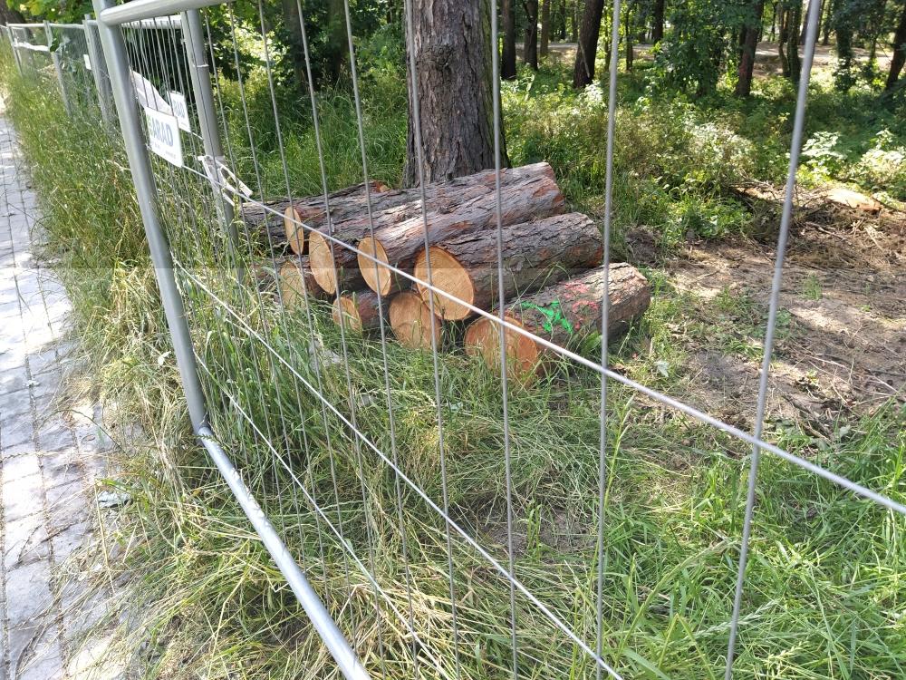 Pozyskiwanie drewna bez pozyskiwania - Zdjęcie główne