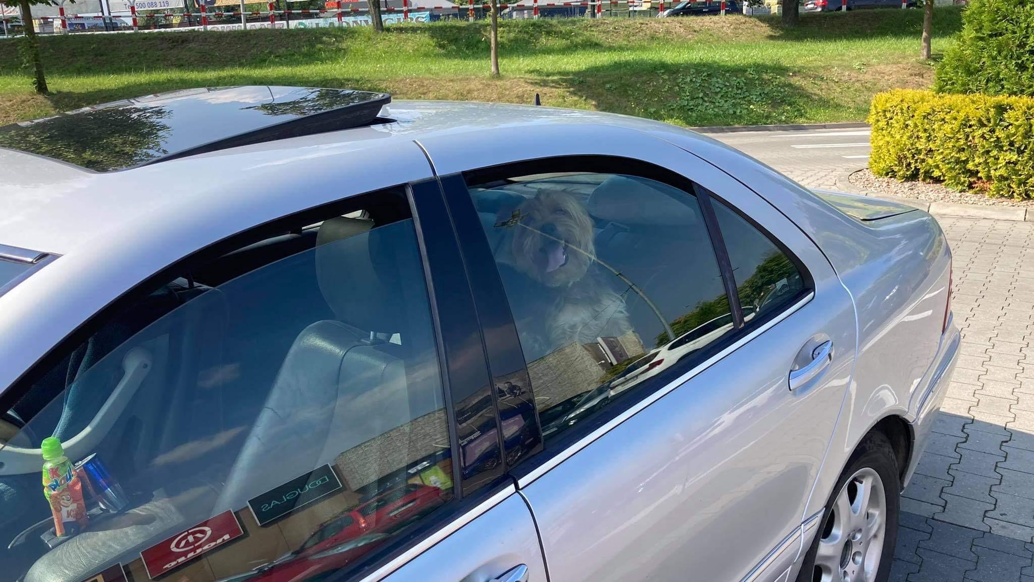 Kłodzko: Zostawili psa w samochodzie i poszli na zakupy - Zdjęcie główne