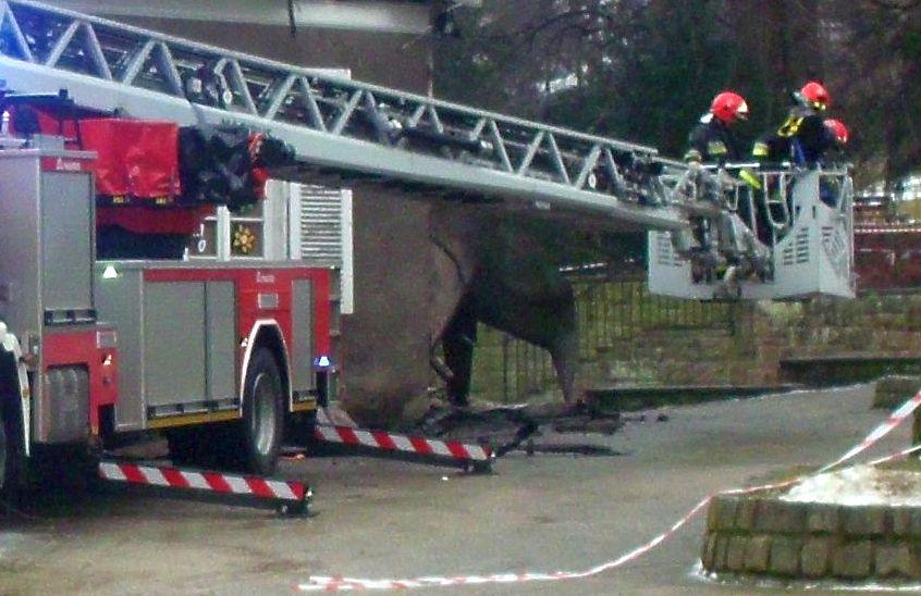 Płonęły samochody i altanka [raport strażaków] - Zdjęcie główne