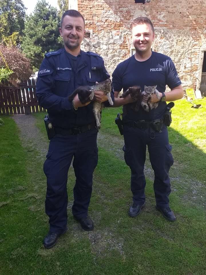 Policjanci z Kamieńca uratowali koty - Zdjęcie główne