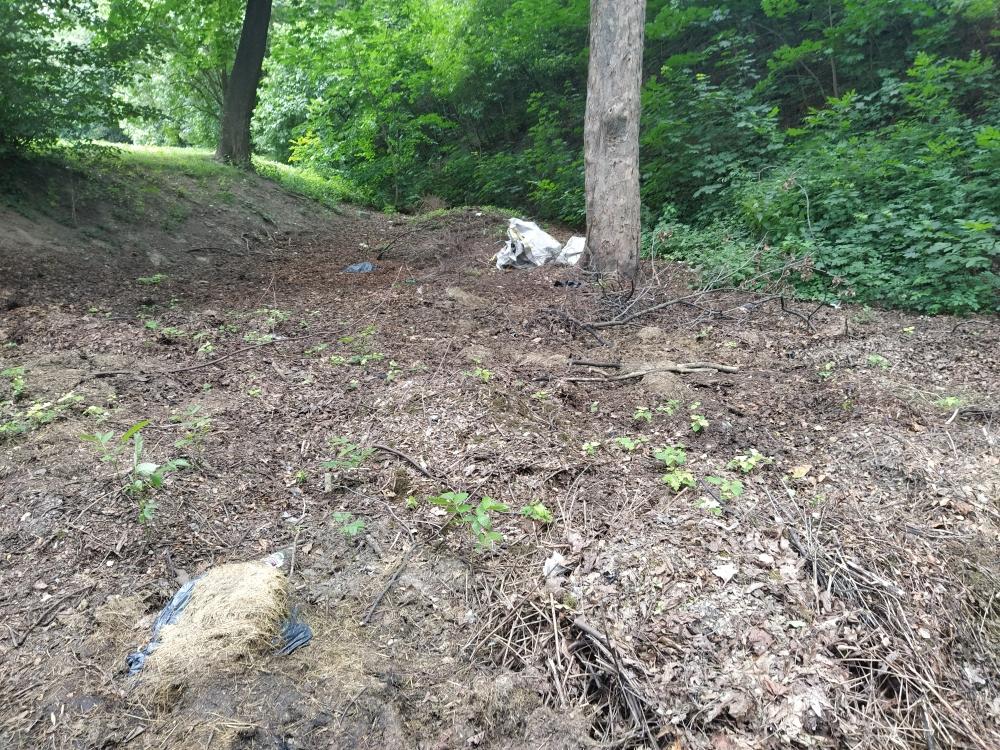 Kto w ząbkowickim parku urządził składowisko odpadów? - Zdjęcie główne